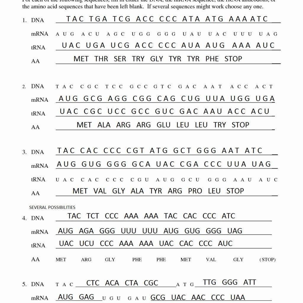 30 Dna Transcription And Translation Worksheet