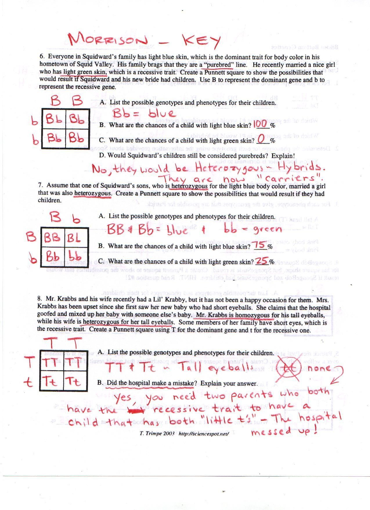 30 Genotypes And Phenotypes Worksheet Answers