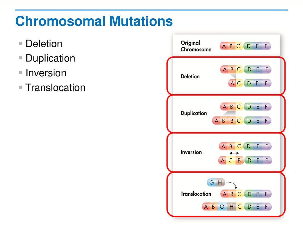 30 Mutations Worksheet Answer Key