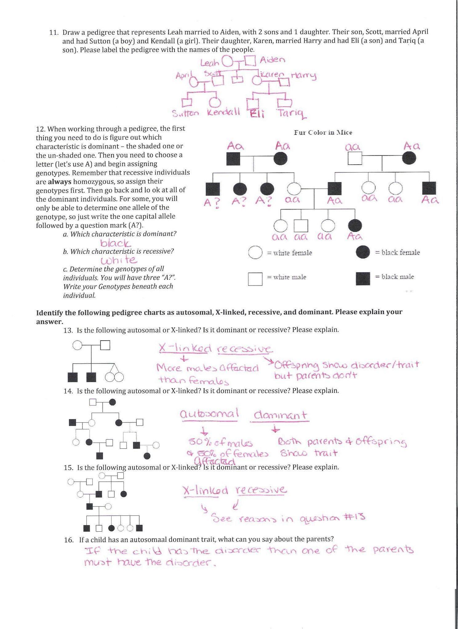 30 Pedigree Worksheet Answer Key
