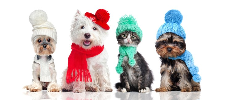 Dogs and cats wearing clothes
