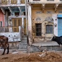 Truncated in Pushkar