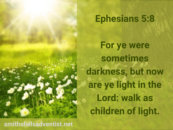 Illustration-landscape-light through tree branches-title-You are light in the Lord in Ephesians 5 verse 8-title-Bible verse