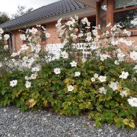 En vedligeholds nem have, uden græs