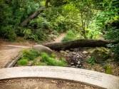 Fern Grotto, Circle of Peace, AIDS Memorial Garden