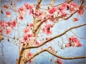 06_magnolias_SMKane__