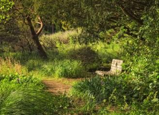 In the SF Botanical Garden near California Natives area