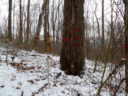 Surveying, Franklin NC - 17