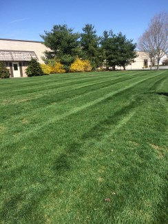 After: Clean cut yard using an Exmark striping kit