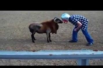 Video : Berbec contra Idiot! Cine credeti ca va castiga?
