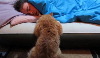 VIDEO HAIOS! Pisicile înlocuiesc cu succes ceasul cu alarmă. Cum reuşesc să-şi trezească stăpânii