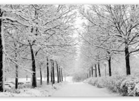 Iarna grea la Satu Mare. Ce surprize ne mai rezerva vremea in urmatoarele 2 saptamani