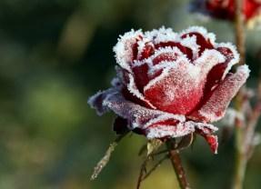 Vremea va fi deosebit de rece și se asteapta  brumă la Satu Mare
