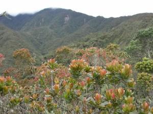 4 Blick im den Bergregenwald