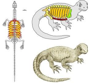 Pappochelys - Vom Skelett zur Rekonstruktion