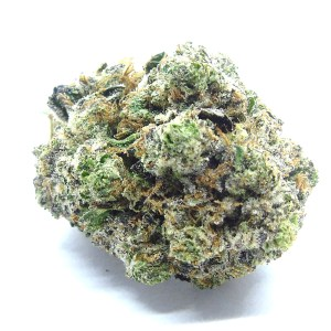 Rockstar x Tahoe Cannabis Strain - Weed Delivery London