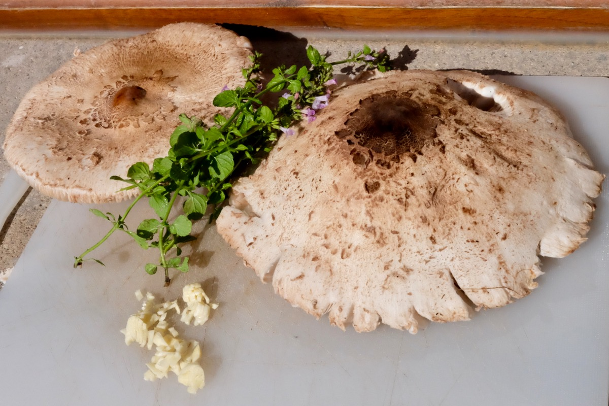 Another seasonal special – fried Mazze di Tamburo (Parasol mushrooms)