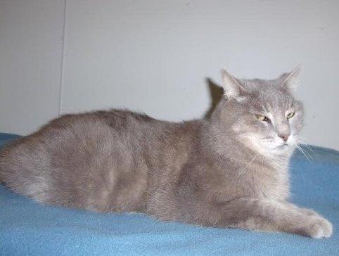 Billy Bob cat