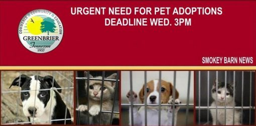urgent-adoptions-needed-greenbrier animal control
