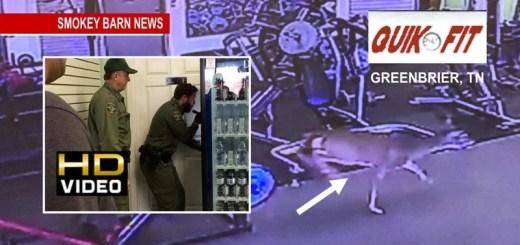 Deer Gets Locked In Womens Bathroom At Greenbrier Quik Fit