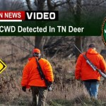 Hunters: TN Deer Test Positive For CWD: What You Need To Know