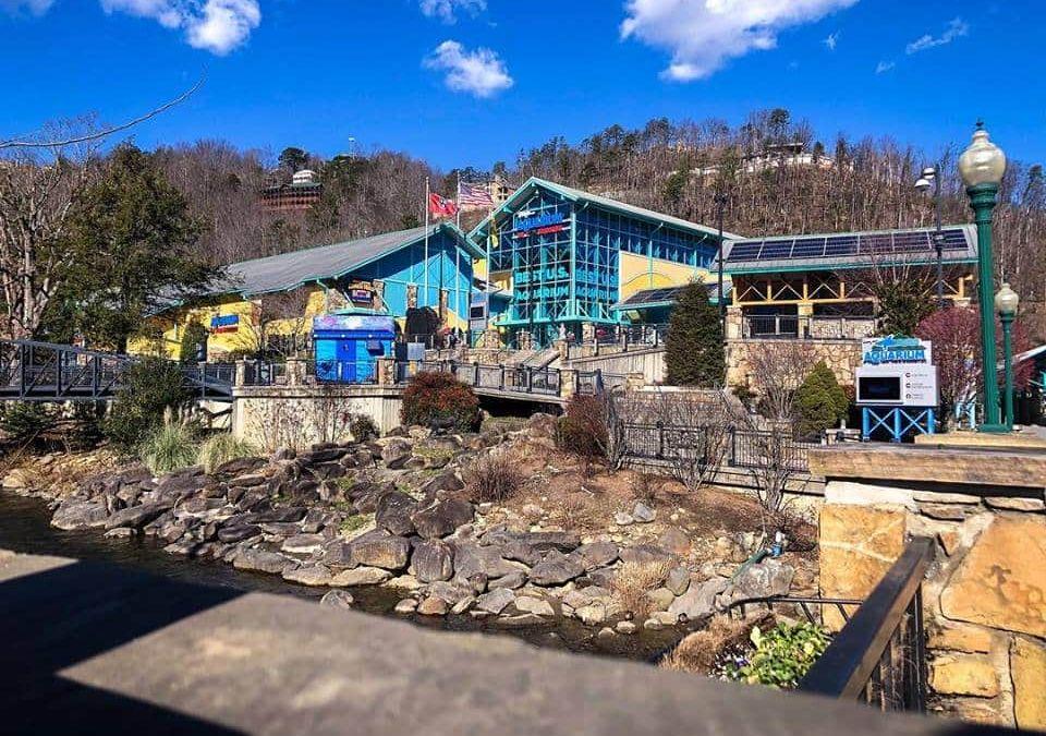 Gatlinburg Aquarium, Gatlinburg Ripleys, Gatlinburg Ripleys Aquarium, Ripleys in Gatlinburg, Smoky Mountain Attractions, Smoky Mountain Ripleys, Smoky Mountain Ripleys Aquarium