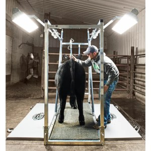 Complete Grooming Chute Packages