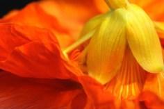 Ballet des Fleurs © Liz Collet