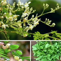5 Unusual High Protein Plants You Can Grow Yourself.