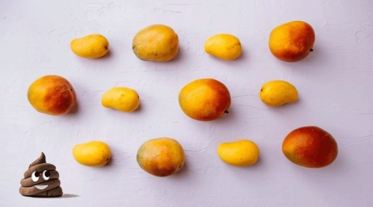 mangoes are healthy and full of flavour