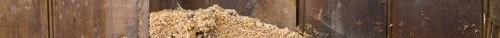 Carpenter Ant Nest How to Spot