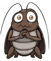 cockroach eyes image