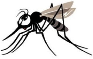 gnat infestation featured image