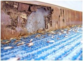 termite significant damage image