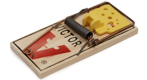 sticky mouse traps featured image