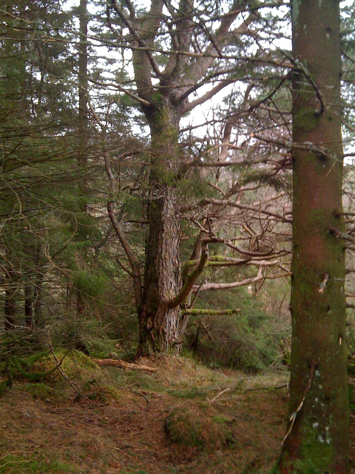 skogsstien1