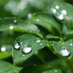 梅雨の由来とは?もともとはカビを意味する「黴雨(ばいう)」だった?