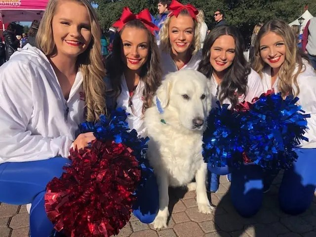 dog on the boulevard with cheerleaders from SMU