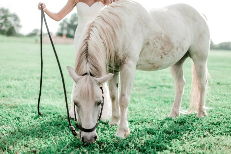 Smart tips for taking care of an old horse
