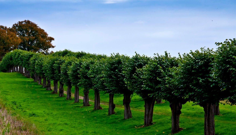 Как зеленые насаждения влияют на настроение?