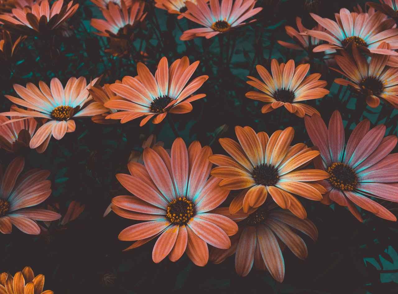 Садовые цветы — которые цветут все лето
