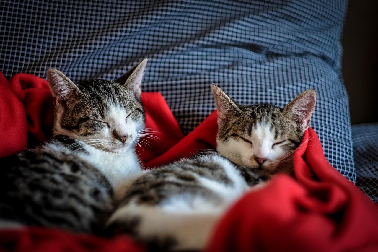 Сколько сна нужно вашей кошке