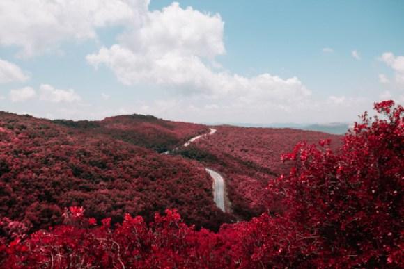 sn_redforest_EdenBachar