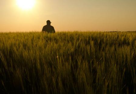 Com recursos insuficientes, governo deve pedir ajuda à iniciativa privada para subvenção do seguro rural