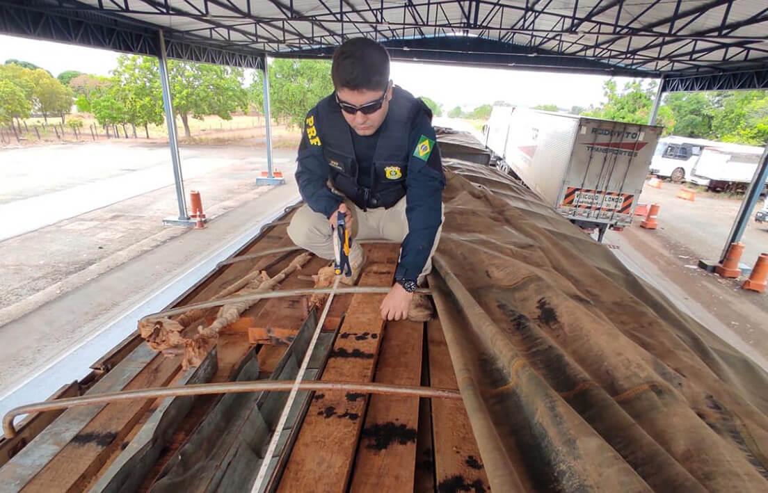 Polícia Rodoviária Federal flagra madeira de corte proibido sendo transportada ilegalmente em caminhão bitrem