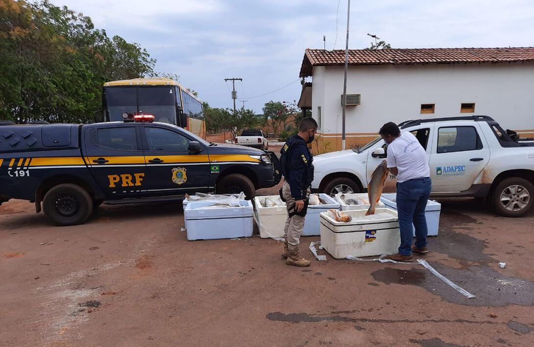 Polícia Rodoviária Federal flagra cerca de 1,5 tonelada de pescado transportado irregularmente e impróprios para consumo