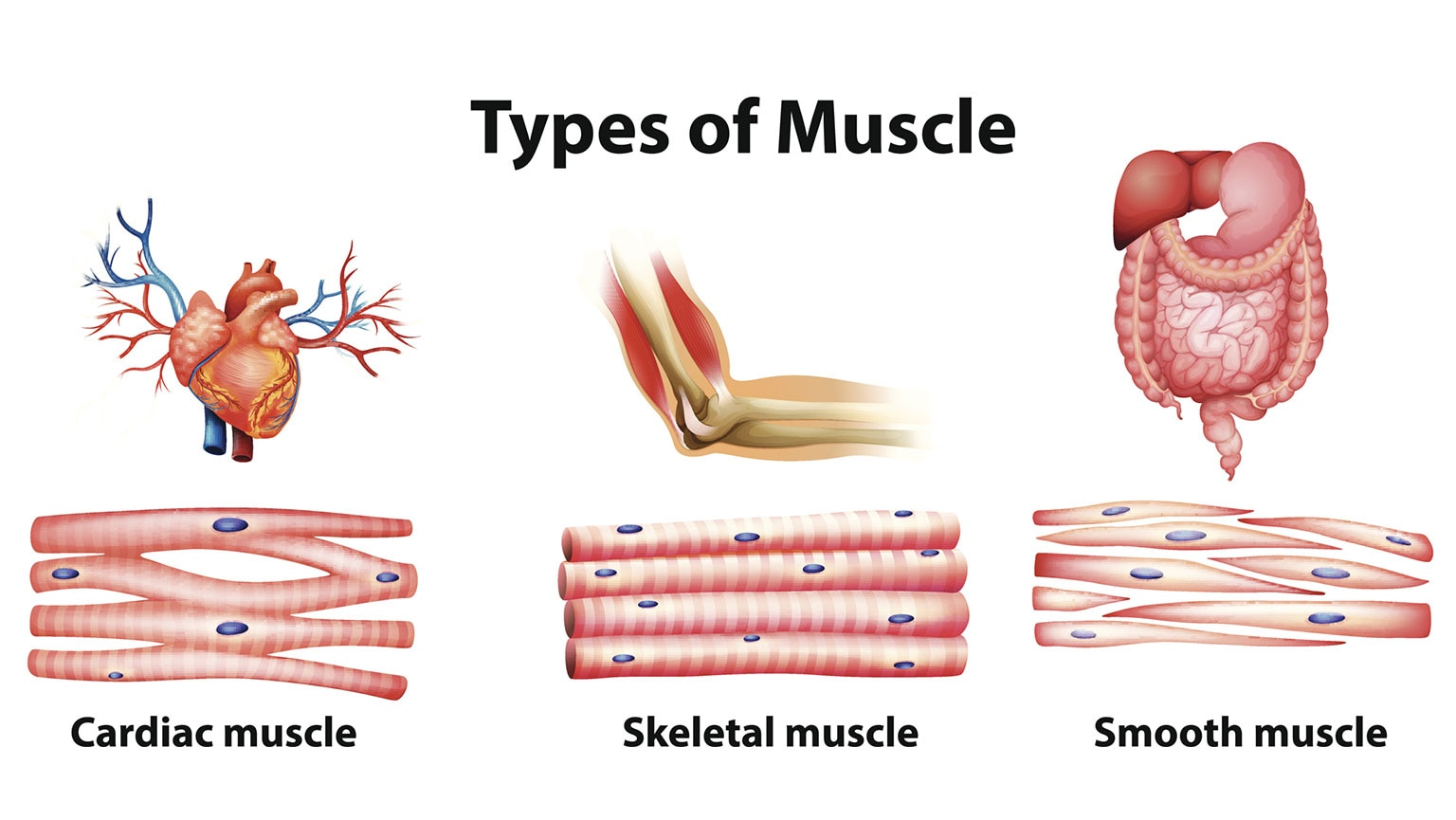 Musculoskeletal Worksheet Answers