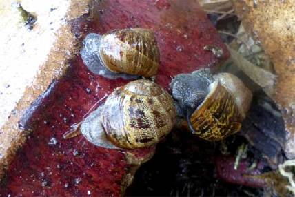 Snails living on the edge- they just don't know it!