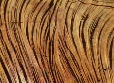 Sawn Log -hard, rippled texture