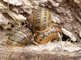 Snail pyramid, of sorts